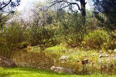 Free Pond Royalty Free Stock Photos - 9728148