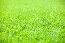 Free Green Grass Stock Photos - 9729363