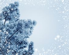 Free Winter, Frost, Sky, Branch Royalty Free Stock Photography - 97216067