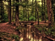 Free Nature, Woodland, Forest, Reflection Stock Photos - 97218103