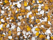 Free Leaf, Autumn, Deciduous, Spring Royalty Free Stock Photos - 97218128