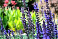 Free Plant, Flora, Purple, Flower Royalty Free Stock Photo - 97218165