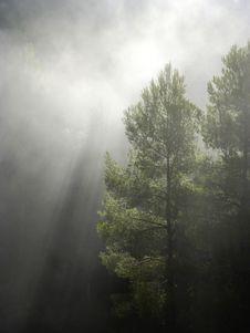 Free Mist, Fog, Tree, Nature Stock Images - 97218494