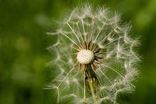 Free Dandelion, Flower, Vegetation, Plant Stock Images - 97218644