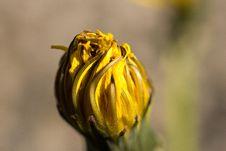 Free Yellow, Flower, Macro Photography, Close Up Stock Photo - 97218670