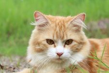 Free Cat, Whiskers, Fauna, Small To Medium Sized Cats Royalty Free Stock Image - 97219546