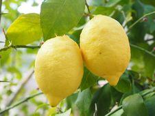 Free Citrus, Fruit, Lemon, Citron Stock Photos - 97219573