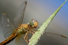 Free Insect, Dragonfly, Invertebrate, Dragonflies And Damseflies Royalty Free Stock Photo - 97220205