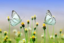 Free Butterfly, Flower, Yellow, Moths And Butterflies Stock Photos - 97220463