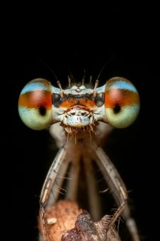 Free Insect, Invertebrate, Macro Photography, Organism Stock Photos - 97220503