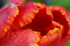 Free Flower, Orange, Close Up, Petal Stock Images - 97221584