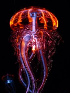 Free Jellyfish, Organism, Special Effects, Cnidaria Stock Images - 97221704