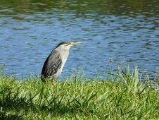 Free Bird, Water, Fauna, Ecosystem Royalty Free Stock Photography - 97275627