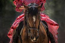 Free Horse, Bridle, Horse Like Mammal, Horse Tack Stock Images - 97275674