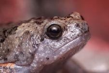 Free Toad, Amphibian, Frog, Fauna Stock Photo - 97286190