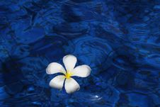 Free Blue, Water, Flower, Petal Stock Photo - 97287300