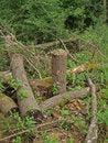 Free Pile Of Logs. Stock Photos - 9730083