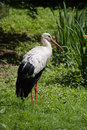 Free Stork Royalty Free Stock Images - 9730569