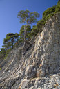 Free Pine Tree On The Stone Stock Images - 9730964
