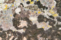 Free Moss And Lichen On Granite Stone Royalty Free Stock Photos - 9732098