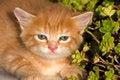 Free Sweet Kitty Royalty Free Stock Image - 9732466