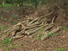 Pile Of Logs. Stock Photography