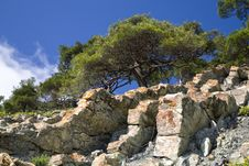 Free Pine Tree On The Stone Royalty Free Stock Image - 9730886