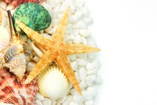Free Seashells And White Pebbles Royalty Free Stock Image - 9732556