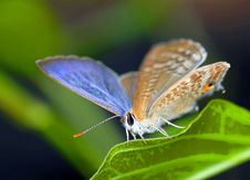 Free Little Butterfly Stock Images - 9732654