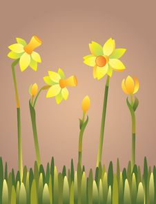Free Daffodils In Green Grass Royalty Free Stock Photography - 9733917
