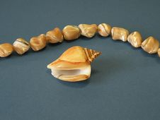 Free Shell And Necklace Stock Photography - 9734542