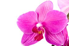 Free Orchid Royalty Free Stock Images - 9734849