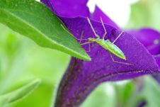 Free Young Grasshopper Stock Photography - 9735282