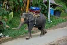 Free Elephant With A Saddle Royalty Free Stock Images - 9735369