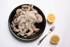 Free Octopus Stock Photo - 9735950