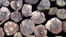 Free Wood Royalty Free Stock Images - 9736789
