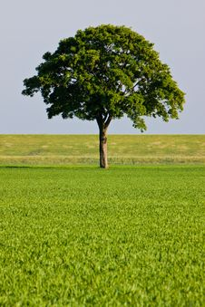 Free Countryside Meadow And Tree Stock Photography - 9737132