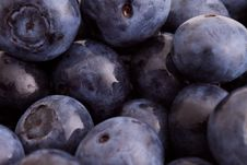 Free Blueberry Macro Royalty Free Stock Photo - 9737585