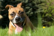 Free Funny Dog In The Grass Royalty Free Stock Photos - 9738038
