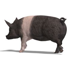 Free Pig Render Royalty Free Stock Images - 9738869