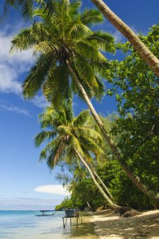 Free Tropical Beach Royalty Free Stock Photo - 9739855