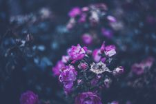 Free Colourful Swirley Bokeh Roses Stock Photos - 97312543