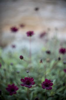 Free Colourful Swirley Bokeh Flowers Royalty Free Stock Photography - 97312557