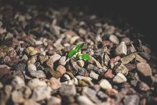 Free A Plant Growing Among The Rocks Royalty Free Stock Photography - 97312597