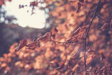 Free Colourful Swirley Bokeh Leaves Stock Photo - 97312600