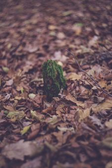 Free Colourful Swirley Bokeh Leaves Royalty Free Stock Photo - 97312735