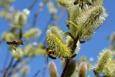 Free Honey Bee, Bee, Flora, Vegetation Royalty Free Stock Photography - 97341307