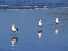 Free Bird, Seabird, Fauna, Shore Stock Image - 97349371