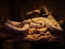 Free Snake, Scaled Reptile, Reptile, Serpent Royalty Free Stock Photography - 97356437