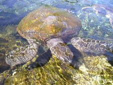 Free Sea Turtle, Turtle, Loggerhead, Water Stock Images - 97356624